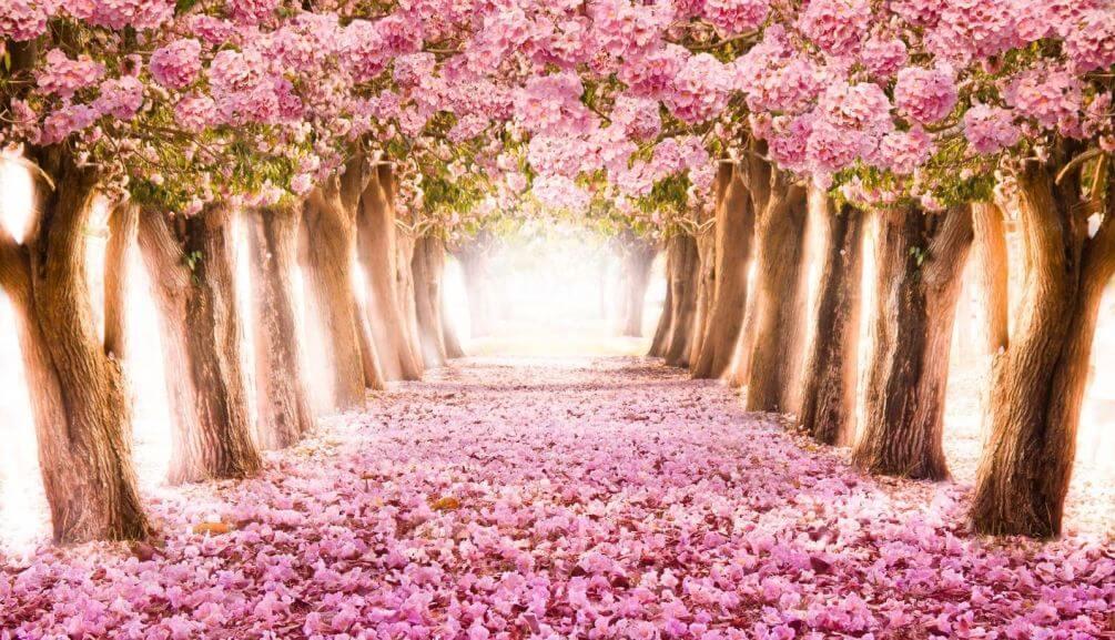 традицией картинки на стену природа и цветы фотолюбители были прочь