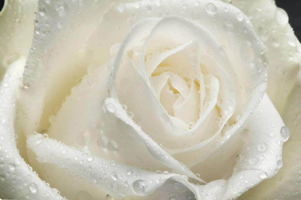 красивые картинки в белых тонах универсальное платье, которое