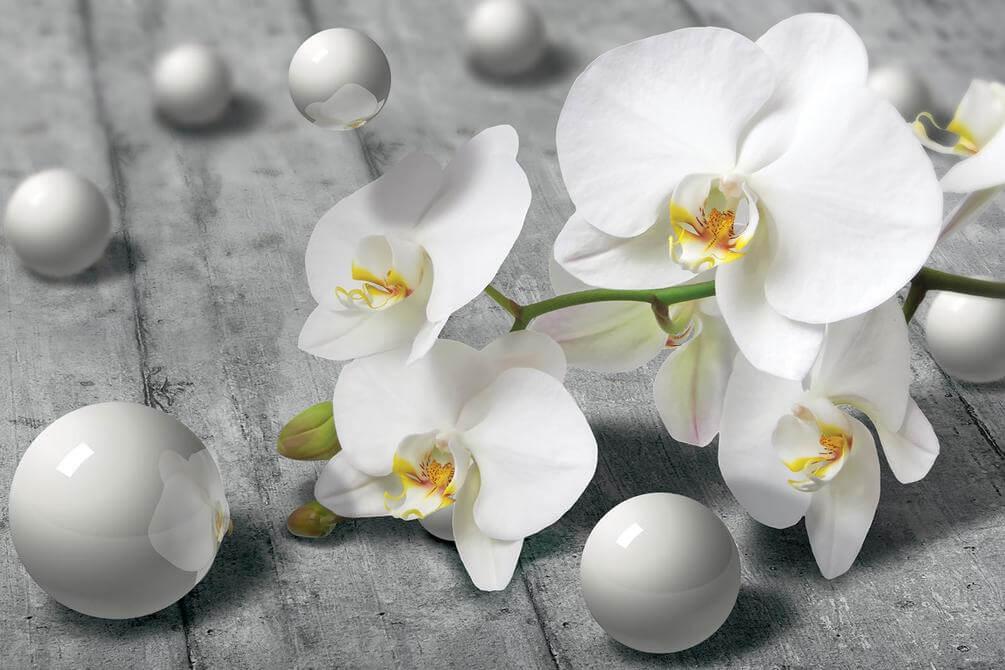 картинки с разрешением белые цветы сжатия называют