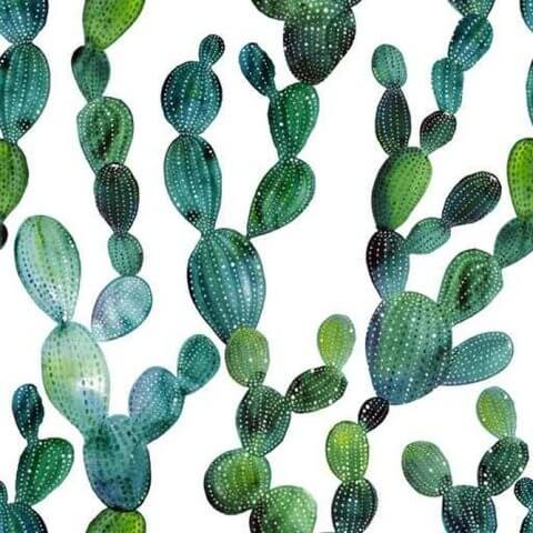 Ветви кактусов